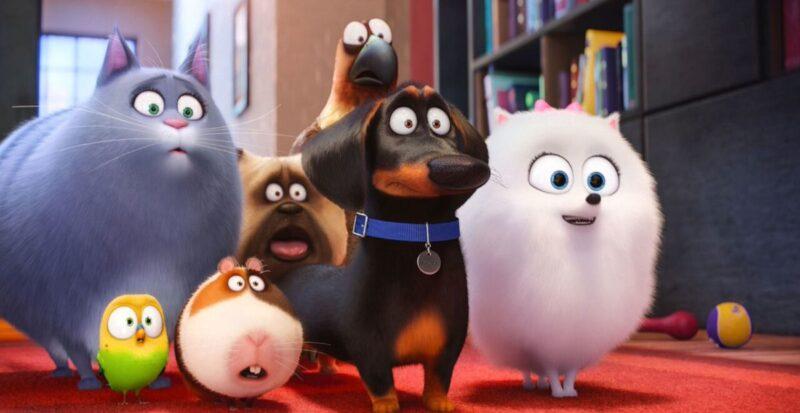 Pets Vita da animali - Infinity