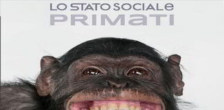 Primati banner