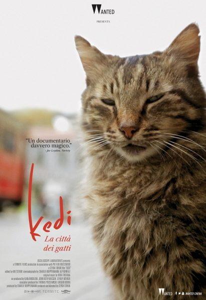 Kedi-La-citta-dei-gatti-poster-locandina