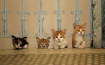 Kedi - La città dei gatti, recensione: che amore tra Istanbul e gatti