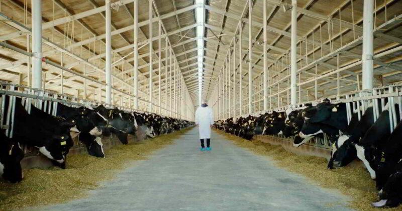 Un'immagine tratta da The Milk System
