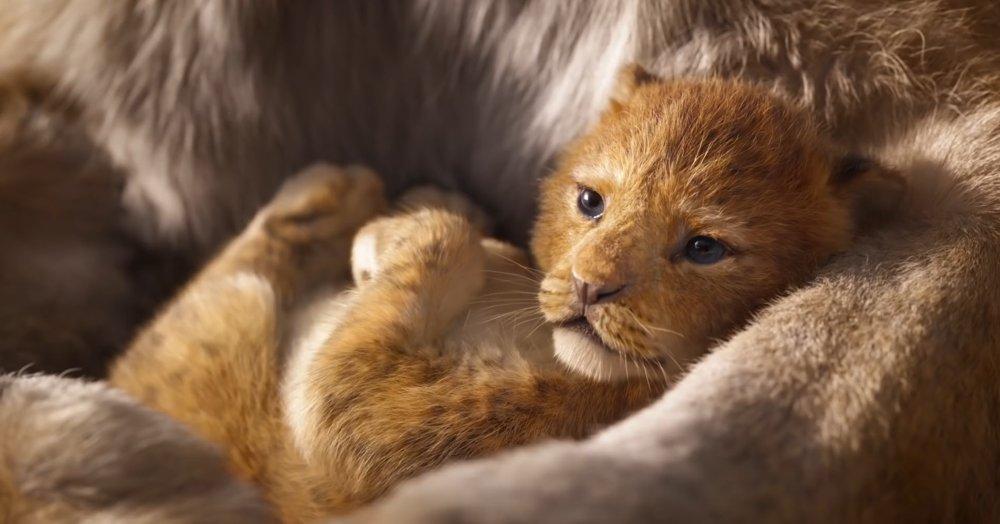 Il re leone - Simba (2)