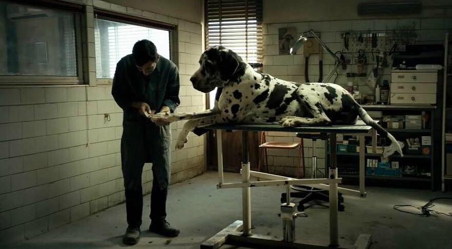 Marcello Fonte in una scena di Dogman, il film con il maggior numero di candidature ai David di Donatello