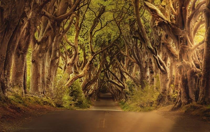 Game of Thrones - La Strada del Re (Irlanda del Nord)