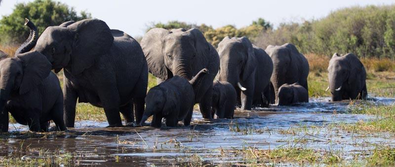 La Famiglia di Elefanti vede protagonisti l'elefante africano Shani e il suo vivace cucciolo Jomo che, insieme al loro branco, intraprendono un epico viaggio di centinaia di chilometri attraverso il vasto deserto del Kalahari